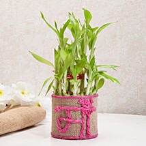 Sincerely Yours Mom Lucky Bamboo Plant: Plants Delivery Today
