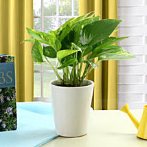 Striking Money Plant: Independence Day Gifts