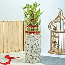Three Layer Bamboo Decor Terrarium: