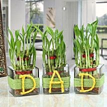 Three Lucky Bamboo Plants For Dad: Fathers Day Gifts Mumbai