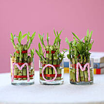 Three Lucky Bamboo Plants For Mom: Today Delivery of Plants