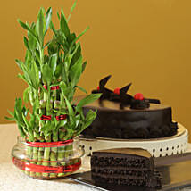 Truffle Cake N Three Layer Bamboo Plant: Cakes to Salem
