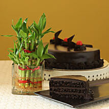 Truffle Cake N Two Layer Bamboo Plant: Midnight Delivery Gifts