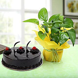 Truffle Cake With Money Plant: Money Tree