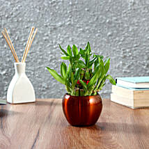 Two Layer Bamboo Plant in Brass Orchid Metal Pot: Indoor Plants