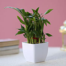 Two layer Bamboo Plant: Gifts Delivery In Omr