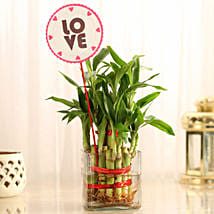 Two Layer Bamboo in Vase with Love Tag: Indoor Plants