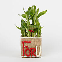 Two Layer Lucky Bamboo in a Glass Vase For U: Plants - Same Day Delivery