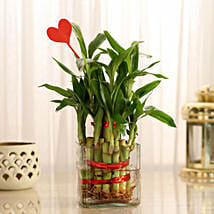 Two Layer Lucky Bamboo With Heart Shaped Tag: Send Plants to Kolkata