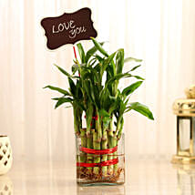 Two Layer Lucky Bamboo With Love You Tag: Send Plants to Bangalore