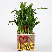Valentine Special 2 Layer Lucky Bamboo In Love Vase: Send Plants to Pune