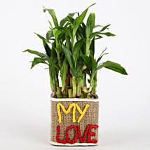 Valentine Special 2 Layer Lucky Bamboo In My Love Vase: Send Plants to Bangalore