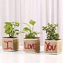 Valentine Special Set Of 3 Green Plants: Plants - Same Day Delivery