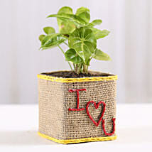 Syngonium Plant in I Love You Vase: All Gifts For Valentine's Day