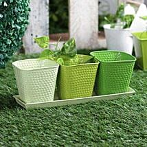 White N Green Planter Set Of 3: Pots for Plants