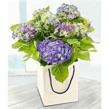 Blue Hydrangea: Flower Delivery in London UK