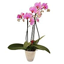 Elegant Orchid: Flower Bouquet Delivery in UK